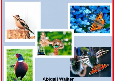 Abigail Walker
